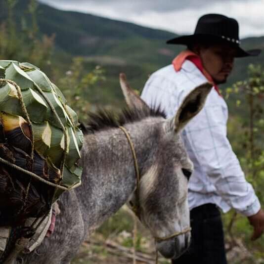 piñas and donkey oaxaca